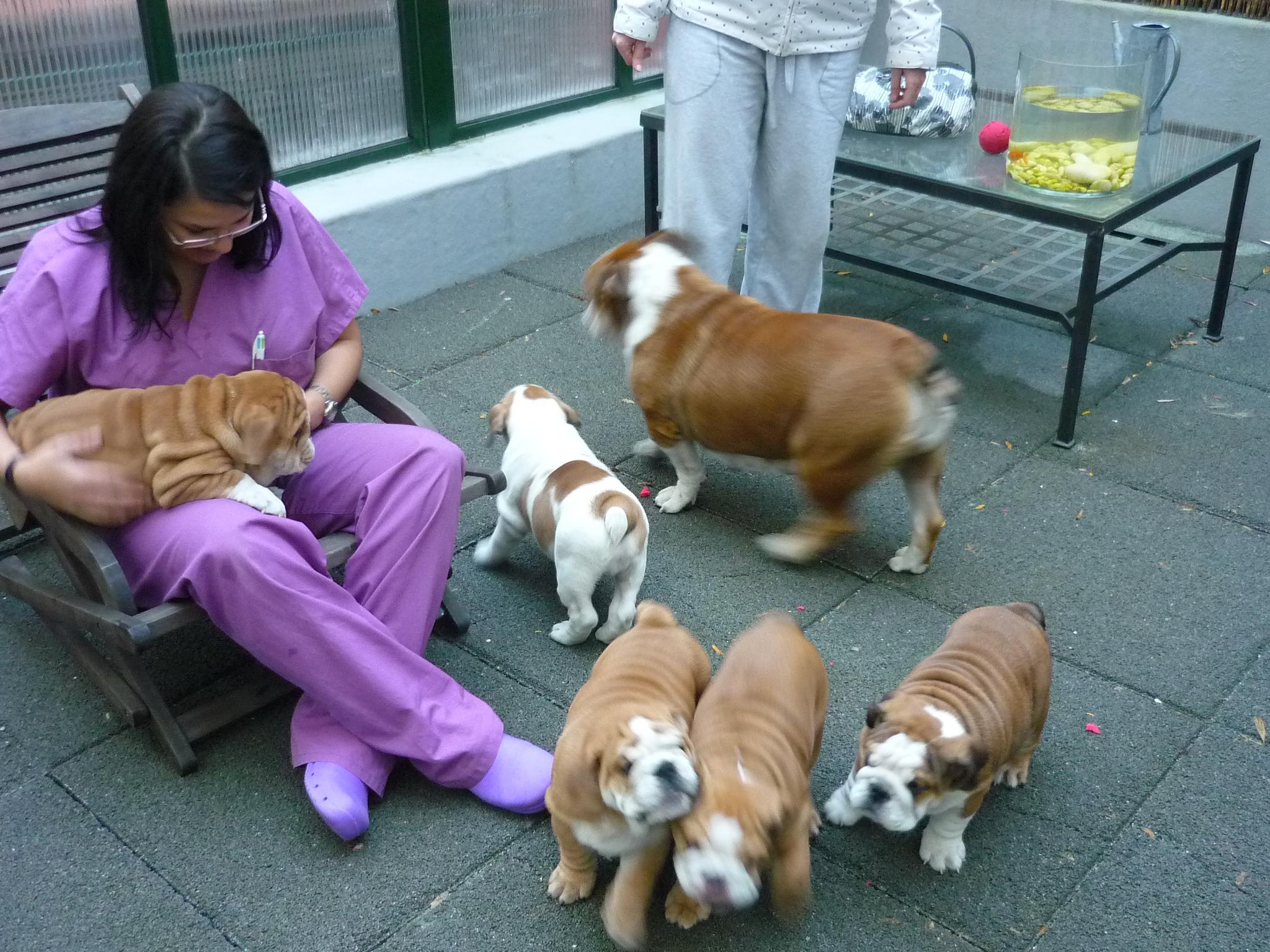 Can cat clínica veterinaria s.l. - santiago de compostela
